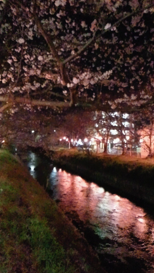 凛と空に咲く-2012040120560000.jpg
