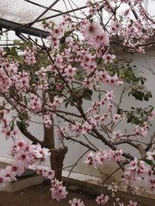 仏教料理研究会のブログ