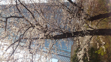 ママっちブログ-DSC_0228.jpg