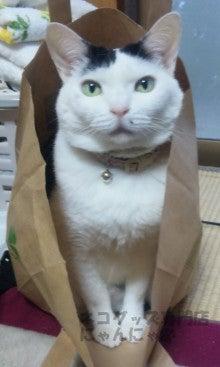 ネコグッズ専門店にゃんにゃ-スリムに見える猫
