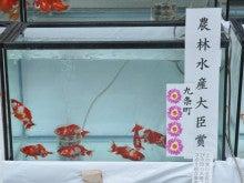 土佐錦魚のブログ