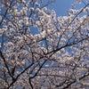 花見弁当の画像