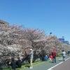 さくらまつり in くすのき園 2012-04-07の画像