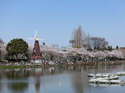 北京大学に短期留学をしました。-浮間公園桜