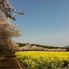 西都原の花見の画像