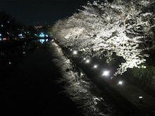 「ひつじのお里」in 京都 ~ヒーリングと 喜びのからだと 心~-夜桜