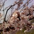 【雑記】春の香