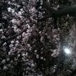 お花見☆in千鳥ヶ淵…