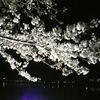 長岡天満宮の夜桜の画像