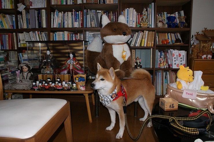 柴犬虎哲の部屋