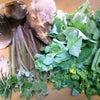 今月の野菜たちの画像
