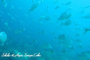 セブ ダイビングショップ アクアスケープのブログ