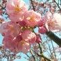 花見&春の嵐。
