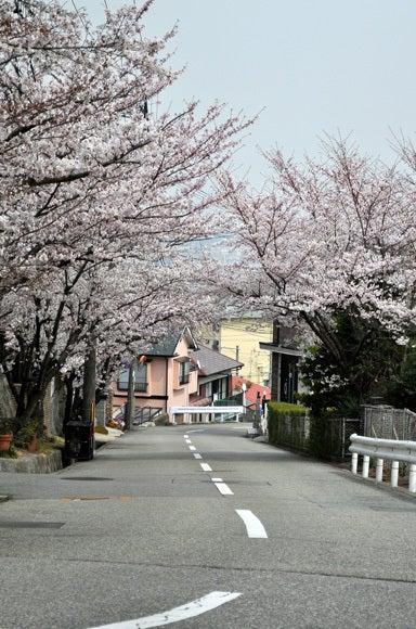 茶々吉とデジ一 のんびり旅-120410_桜の坂2