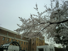 松尾祐孝の音楽塾&作曲塾~音楽家・作曲家を夢見る貴方へ~-科学博物館と桜のコントラスト