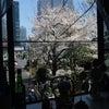 今年の桜。の画像
