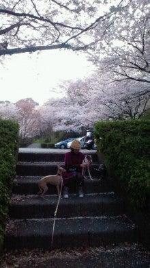 凛と空に咲く-2012041017000000.jpg