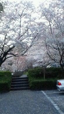 凛と空に咲く-2012041016590000.jpg