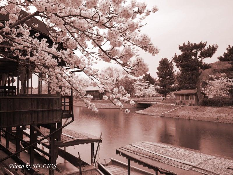 『ケセラセラ~』と、いきましょいっ!☆彡-4/9セピア桜