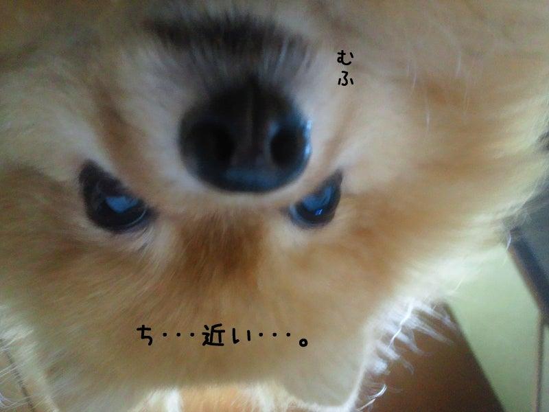 メイプル-ぷる、近い