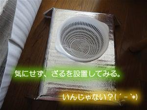 水耕栽培でいってみよう-発泡スチロール容器2-09