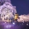SPORTMAX・CODE チュニック丈のカットソー★奈良・ファッションセレクトショップ★ラレーの画像