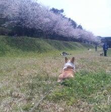 おてんばゆきちゃんさんのブログ-Image7.jpg