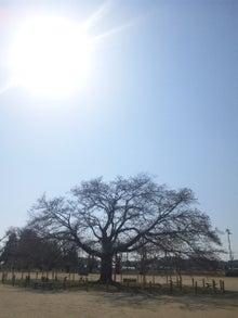 AKB48後追い生活~新参ファンの記録~大島優子(コリス)推し-120408_142018.jpg