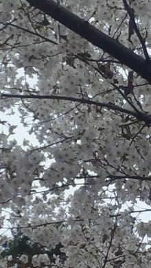 潤子の気ままなブログ-2012041013190001.jpg
