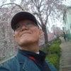 浅草の桜の画像