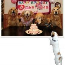 老犬写真展~北海道・…