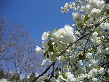 i Canada☆ベテランカウンセラーのいるバンクーバー無料現地留学エージェントのブログ-Apr 14'12 (4) i Canada