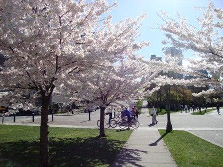 i Canada☆ベテランカウンセラーのいるバンクーバー無料現地留学エージェントのブログ-Apr 14'12 ⑬ i Canada