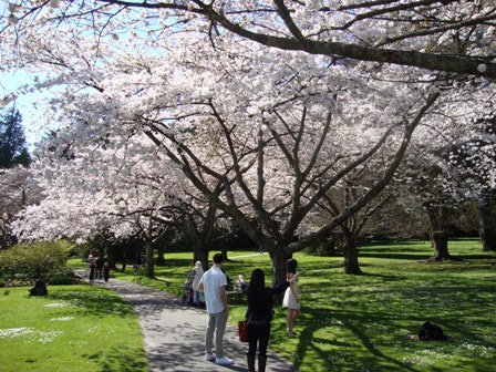 i Canada☆ベテランカウンセラーのいるバンクーバー無料現地留学エージェントのブログ-Apr 14'12 ⑩ i Canada