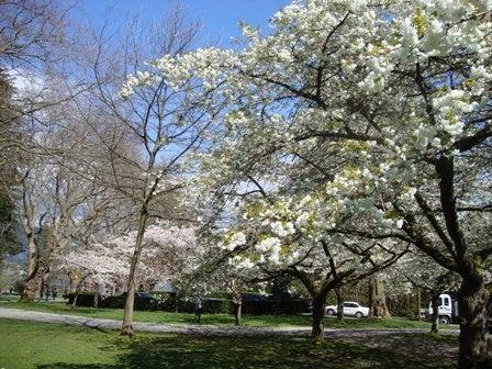i Canada☆ベテランカウンセラーのいるバンクーバー無料現地留学エージェントのブログ-Apr 14'12 (3) i Canada