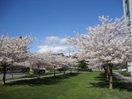 i Canada☆ベテランカウンセラーのいるバンクーバー無料現地留学エージェントのブログ-Apr 14'12 ⑮ i Canada