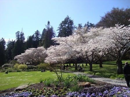 i Canada☆ベテランカウンセラーのいるバンクーバー無料現地留学エージェントのブログ-Apr 14'12 ⑪ i Canada