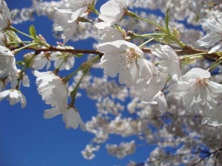 i Canada☆ベテランカウンセラーのいるバンクーバー無料現地留学エージェントのブログ-Apr 14'12 ⑭ i Canada