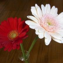 今日届いた花