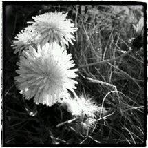 野に咲く花のように。…