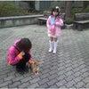 前橋市 犬のしつけ 合同訓練 アイズ教室の画像