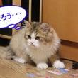 能ある猫は…