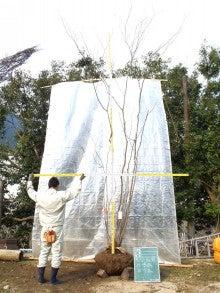 溝口植木農園☆山採り樹木ブログカタログ-097ヤマモミジ
