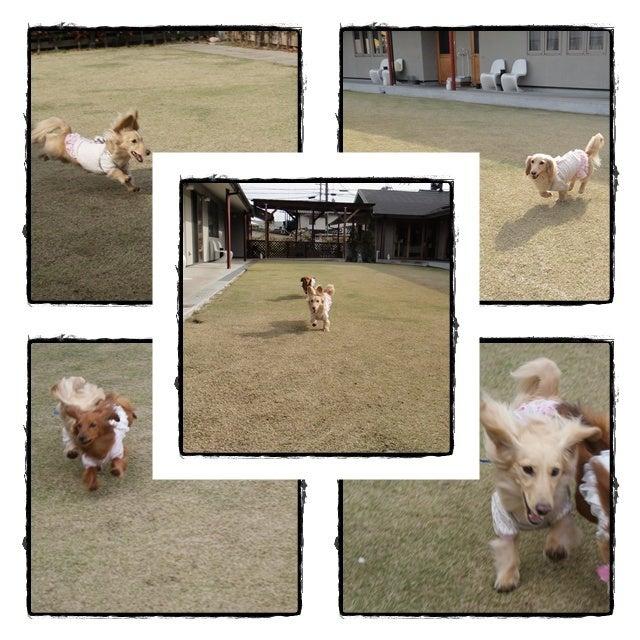 旅犬Lani&Leaのほほん風船記-「K-YARD」de❤Run