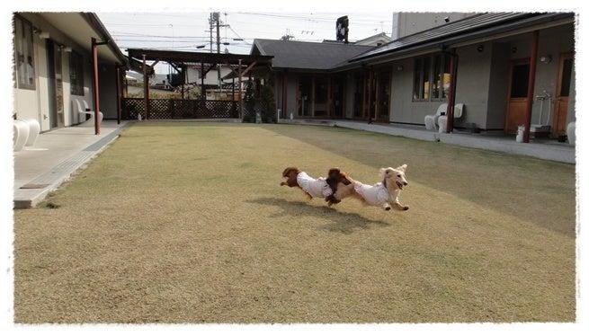 旅犬Lani&Leaのほほん風船記-K-yard