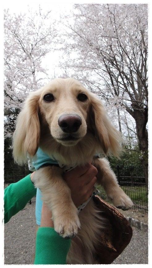 旅犬Lani&Leaのほほん風船記-多賀SAドッグラン