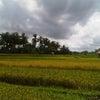 Ubud - Baliの画像