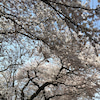 ☆○o。..:*。,:これからの季節のスキンケア:,。*:..。o○☆見ないと損しちゃいますよ!の画像