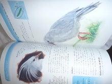 AMNESIA SYNDROME-国鳥カグー