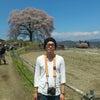 王仁塚の一本桜。の画像